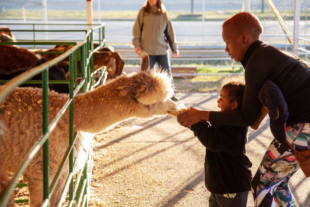Photo of child feeding llama at Rockin a Ranch Petting Zoo